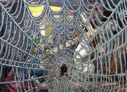 carry cross.spiderweb